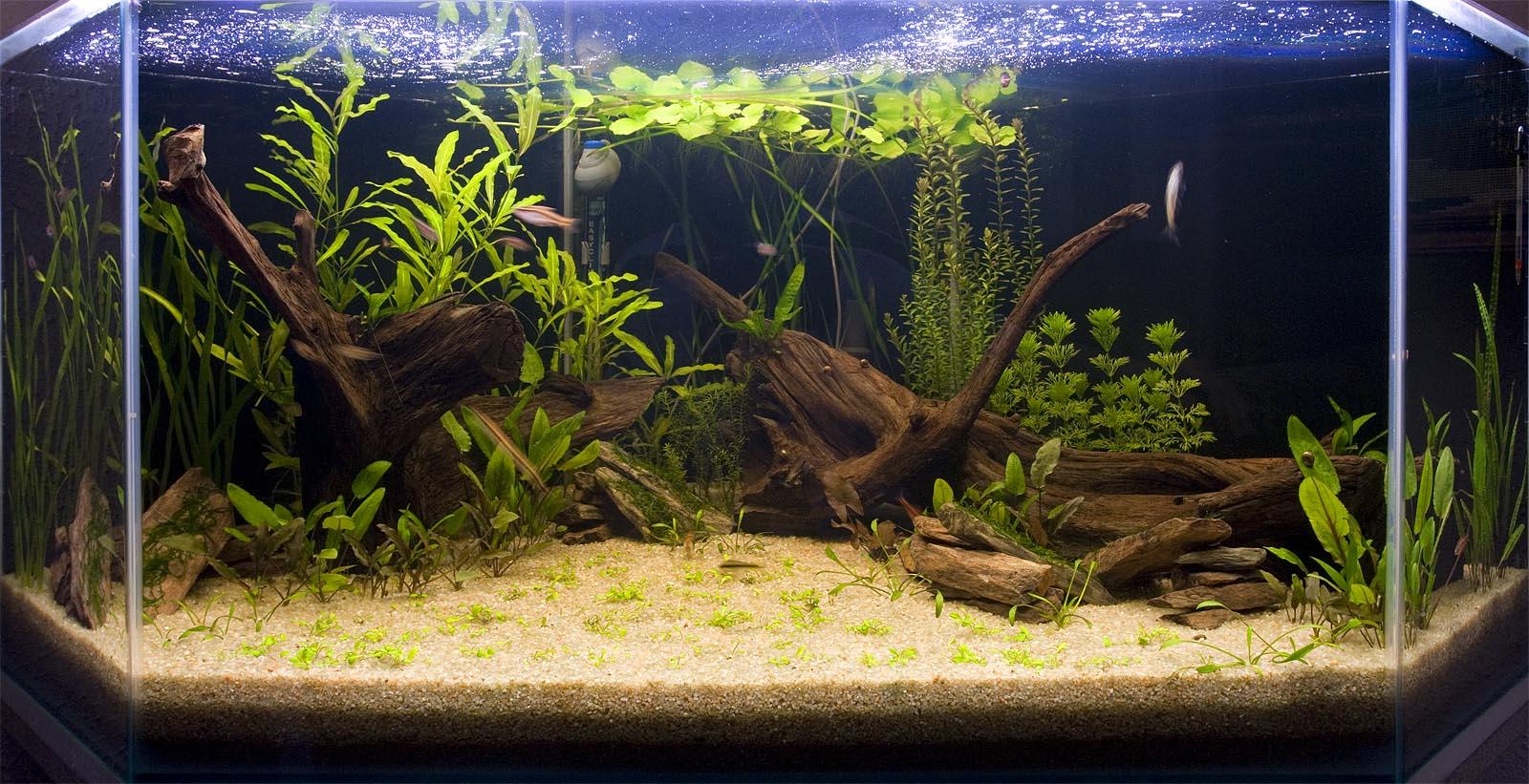 idée déco pour aquarium