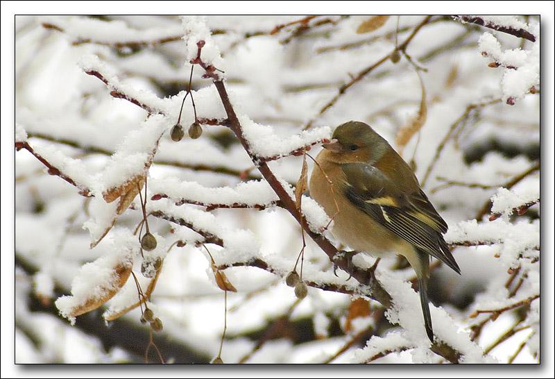 http://antho53.free.fr/forum/oiseaux/PICT3732_m.jpg